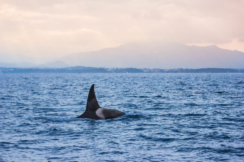 Observation d'orque au Pays Basque avec Explore Océan, une balade en bateau sur la cote basque, activités de loisir à Saint Jean de Luz