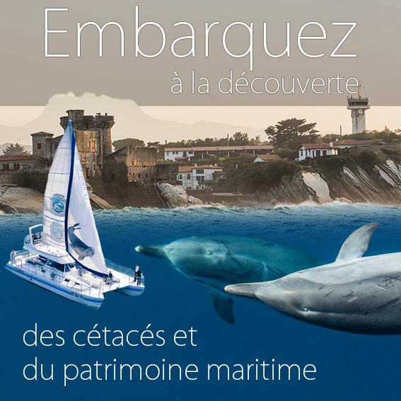 Embarquez à la découverte des dauphins et baleines et du patrimoine maritime au Pays Basque