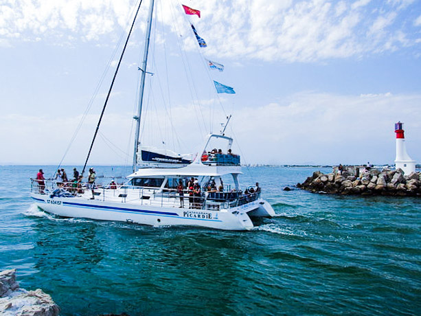 catamaran Atalya-explore ocean-dauphin-pays basque-natrue-cetacé-baleine-cote basque