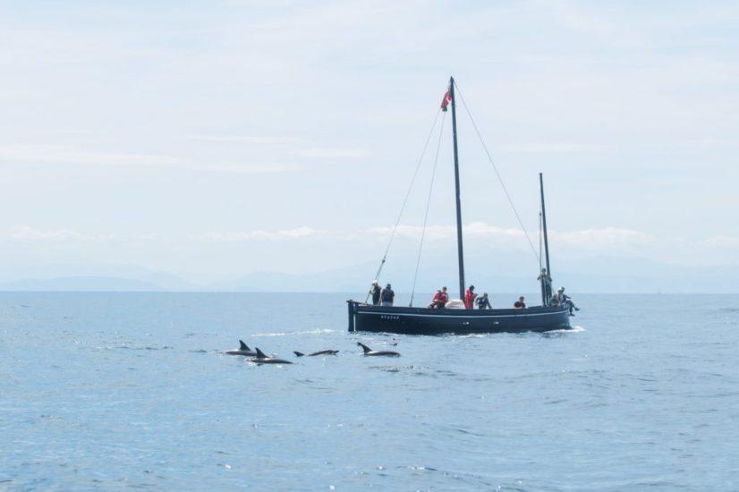 chaloupe-patrimoine basque-histoire basque- dauphins-baleine-cétacé-nature-activité-saint jean de luz