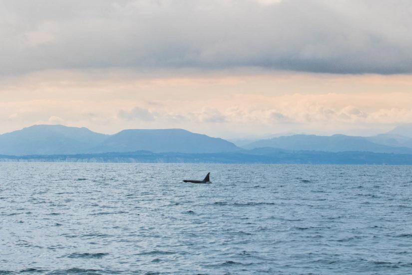 orque au Pays basque, observation orque, whale watching au Pays Basque, à visiter au Pays basque, tourisme, vacance, aquitaine, sud-ouest, Gouf de Capbreton