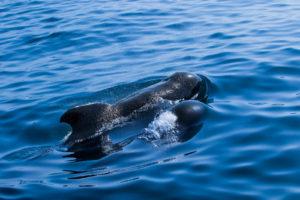 dauphin pays basque saint jean de luz catamaran explore ocean whale watching biarritz france bateau boat dolphin navigation paysage famille promenade mer excursion cétacé cetacean explore ocean