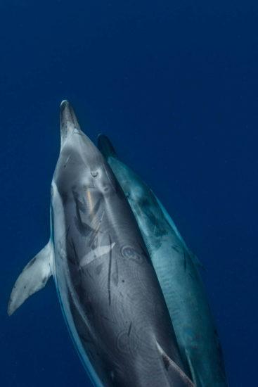 Loisirs à proximité de Biarritz, observation des dauphins avec Explore Océan, balade en catamaran