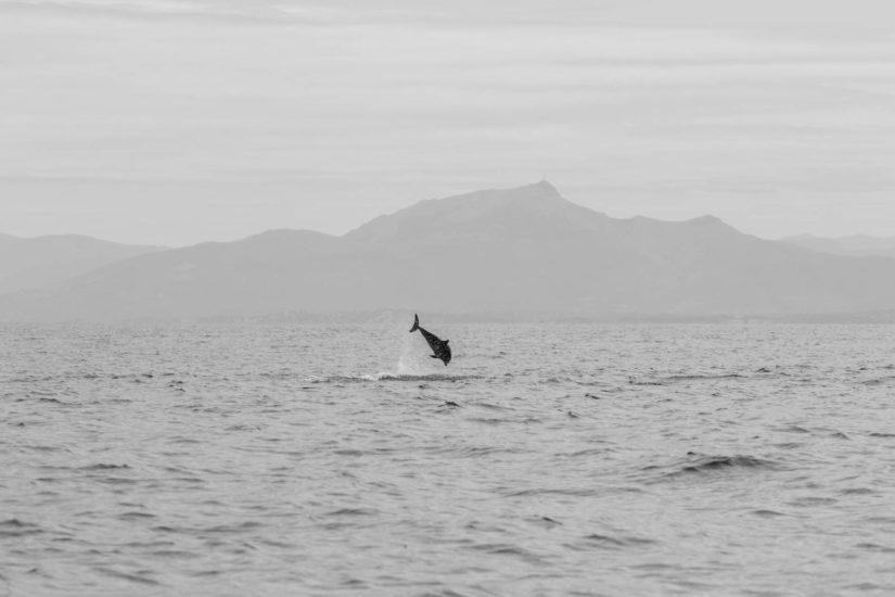 Explore Océan: activité sortie en mer à bord d'un catamaran, vacances au Pays Basque, loisirs à Saint de Luz à proximité de Biarritz, whale watching france, whale watching Pays Basque