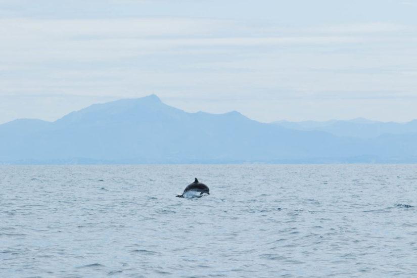 La Rhune sublimée par les dauphins, magnifique basque lors d'une expédition cétacé avec Explore Océan en catamaran, une balade en bateau au Pays Basque