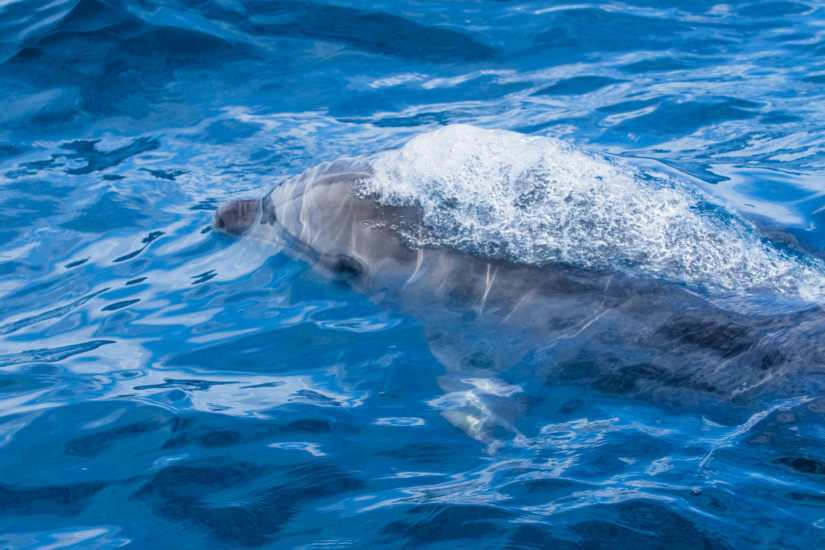 Navigation au Pays Basque, rencontre avec les dauphins en catamaran avec Explore Océan, activité de Saint Jean de Luz