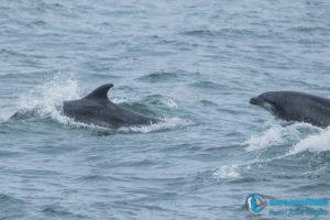 dauphin cote basque explore ocean saint jean de luz